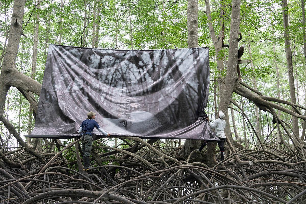 La imagen de Felipe Jácome en los manglares. Foto: Especial
