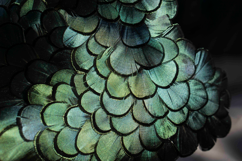Asombroso Uñas Diseños De Plumas Cresta - Ideas de Pintar de Uñas ...