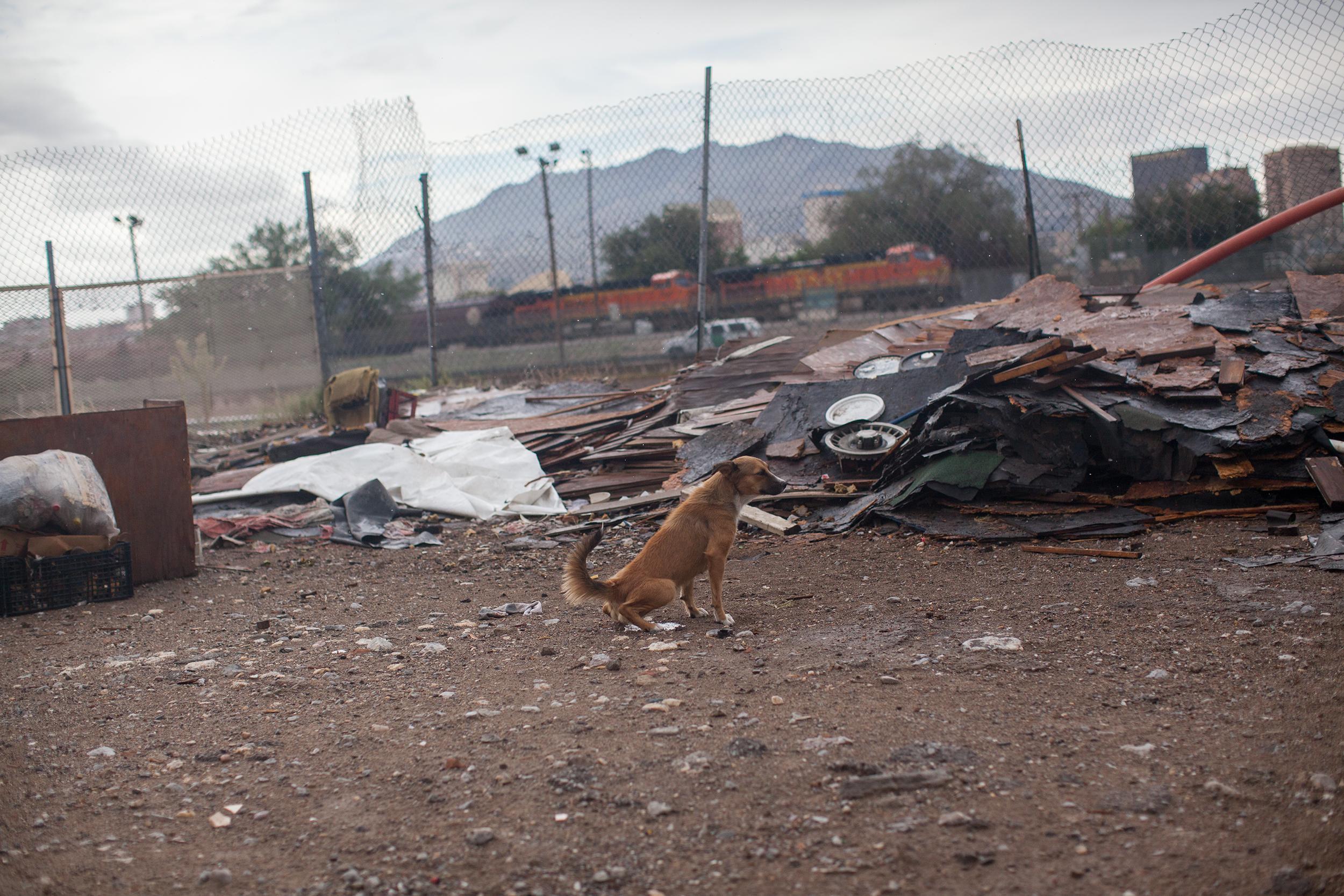 Un perro en la línea fronteriza. Foto: Alejandro Saldívar