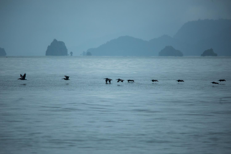 Las aves migran a esta zona de Colombia para reproducirse. Foto: Iván Castaneira