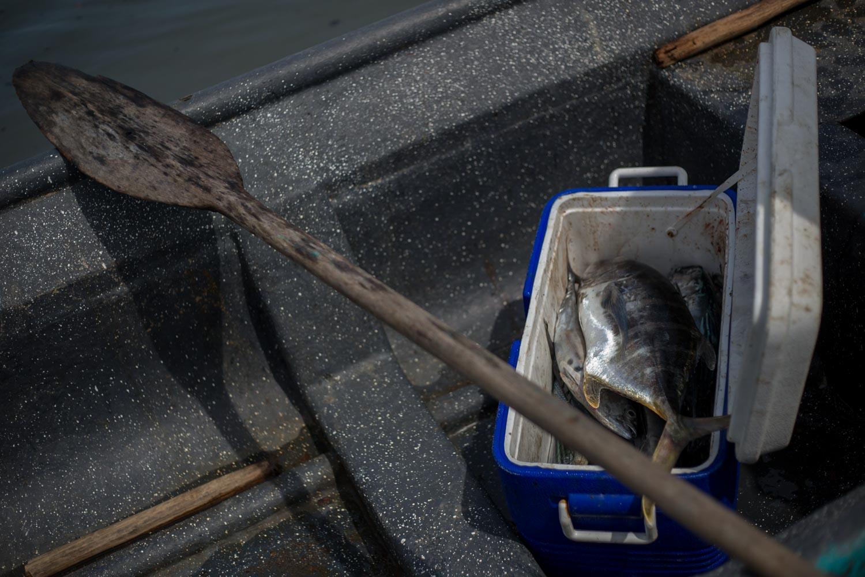 La pesca del día en el Pacífico colombiano. Foto: Iván Castaneira