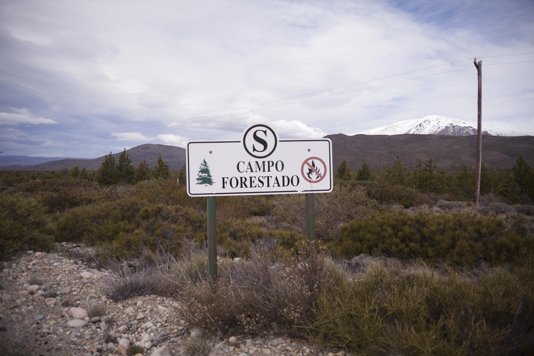Uno de los principales negocios del empresario italiano es la forestación de una inmesa porción de la Patagonia con subsidios del Estado (Pablo Linietsky)