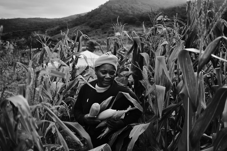 Graça, uma das irmãs de Josefa, em sua roça. Segundo informações do governo, a região agreste passa pela maior estiagem em 50 anos. A falta de registro das terras dificulta a construção de poços artesianos para comunidade dificultando a irrigação das plantações e prejudicando a agricultura familiar. Imagem: Thiago Henrique