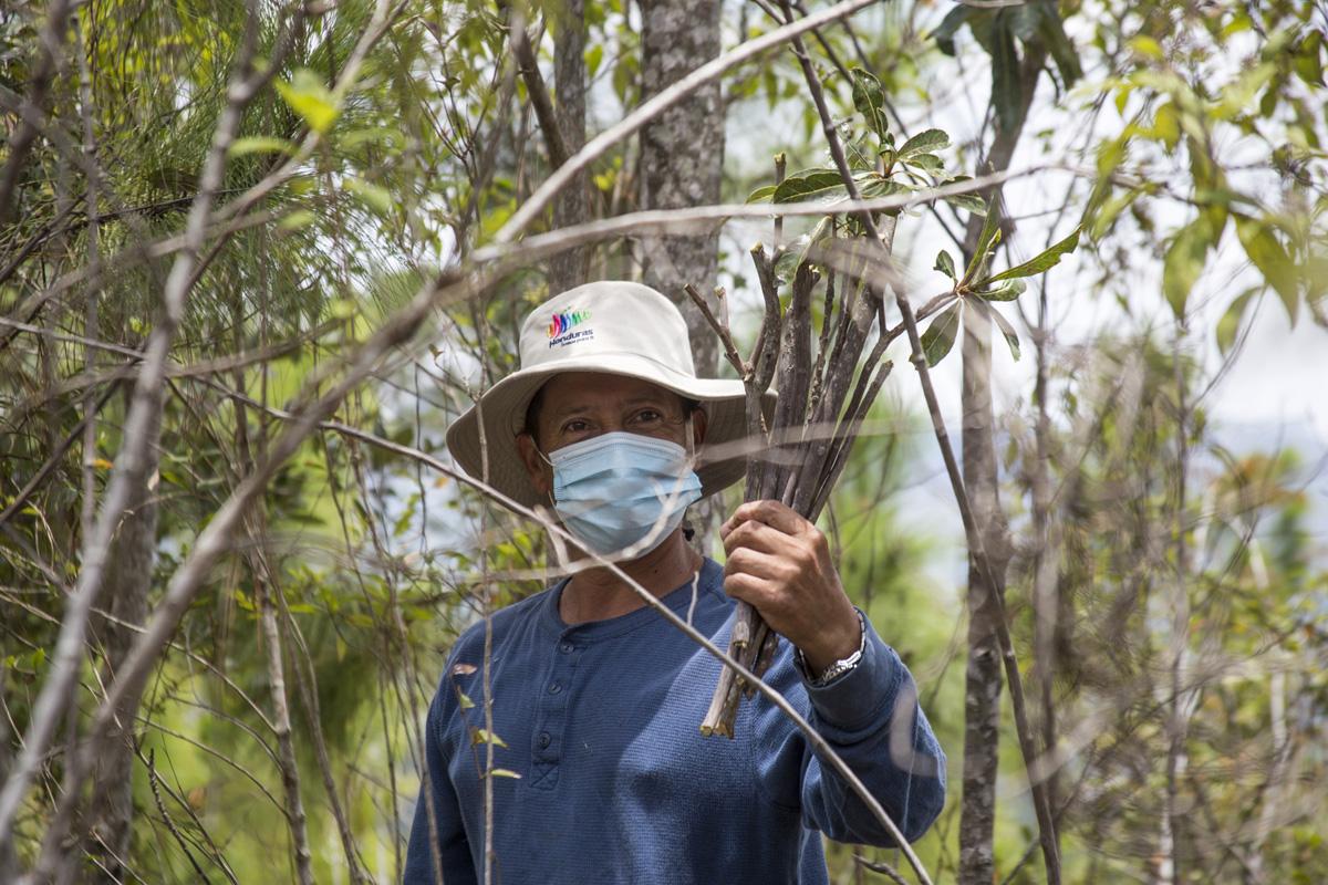 Justo Pastor Zepeda, coordinador del Proyecto Edén, posa con unas ramas o «estacas» recién cortadas que serán sembradas en zonas del Parque Nacional La Tigra, donde ya no existen árboles. Tegucigalpa, 24 de abril de 2021. Foto: Ezequiel Sánchez