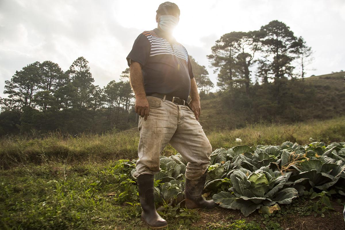 El productor Patricio Colíndres posa junto a un fragmento de sus repollos verdes y morados, sembrados en la zona núcleo del Parque Nacional La Tigra. Tegucigalpa, 24 de abril de 2021. Foto: Ezequiel Sánchez