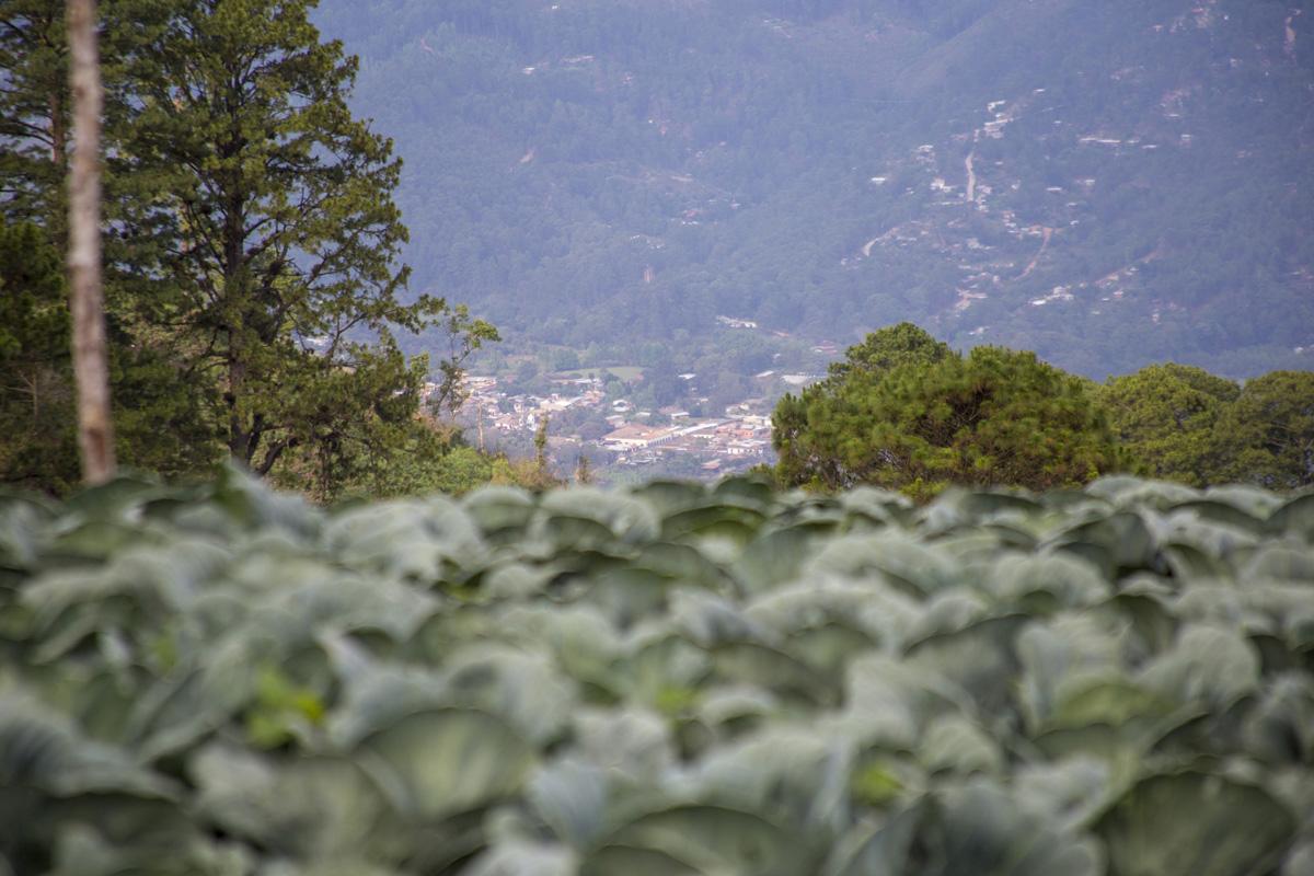 Desde el poblado de Montaña Grande, ubicado dentro de la zona núcleo del Parque Nacional La Tigra y donde siembran repollo como fuente de ingresos, se puede ver el municipio de Valle de Ángeles, conocido por el turismo local. Tegucigalpa, 24 de abril de 2021. Foto: Ezequiel Sánchez